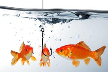 ERP-Risiken managen